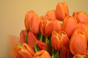 Тюльпаны, оранжевые.