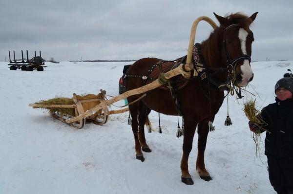А вот как выглядит лошадь в упряжи вблизи.