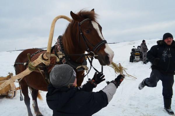 Малец, что приехал на санях, увлеченно кормил лошадь сеном.