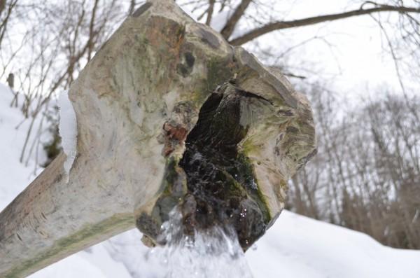 Вода из источника вытекает по полым древесным стволам.